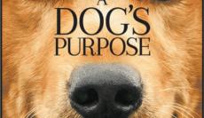A-Dogs-Purpose-หมา-เป้าหมาย-และเด็กชายของผมSoundtrack-ซับไทย-e1535533017943