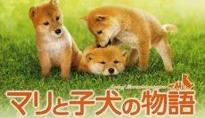 A-Tale-of-Mari-and-Three-Puppies-เพื่อนซื่อ-ชื่อ-มาริ