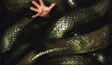 Anacondas-2-อนาคอนด้า-เลื้อยสยองโลก