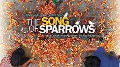 The-Song-of-Sparrows-Avaze-gonjeshk-ha-2008-บทเพลงนกกระจอก