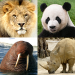 Download Animals Quiz – Learn All Mammals and Dinosaurs! 3.2.0 APK