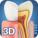 Download Dental  Anatomy 2.3 APK