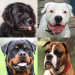 Download Dogs Quiz – Guess Popular Dog Breeds in the Photos 3.2.2 APK