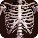 Download Osseous System in 3D (Anatomy) 2.0.3 APK