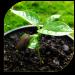 Download Seeds – Planting (Guide) 1.2 APK