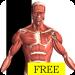Download Visual Anatomy Free 0 APK