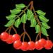 Free Download Лекарственные растения 1.1.0 APK