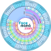 Free Download Pregnancy Weeks Calculator by Facemama 1.1.11.1 APK