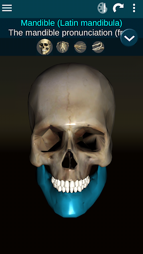 Osseous System in 3D Anatomy v2.0.3 screenshots 1