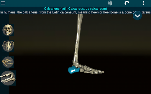 Osseous System in 3D Anatomy v2.0.3 screenshots 11