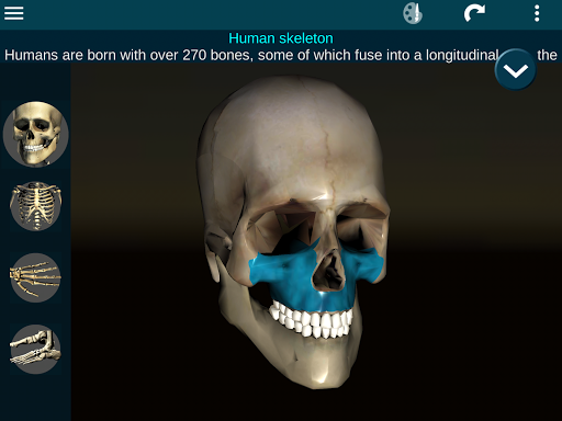 Osseous System in 3D Anatomy v2.0.3 screenshots 15