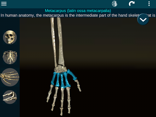 Osseous System in 3D Anatomy v2.0.3 screenshots 18