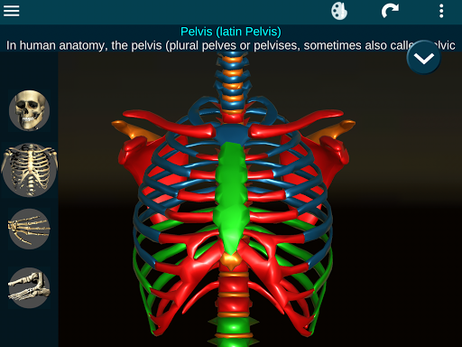 Osseous System in 3D Anatomy v2.0.3 screenshots 19