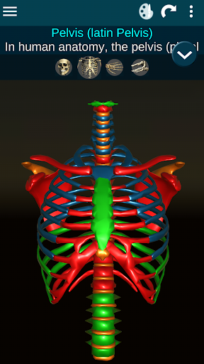 Osseous System in 3D Anatomy v2.0.3 screenshots 2