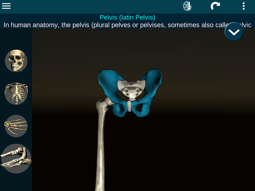 Osseous System in 3D Anatomy v2.0.3 screenshots 21