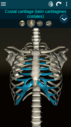 Osseous System in 3D Anatomy v2.0.3 screenshots 4
