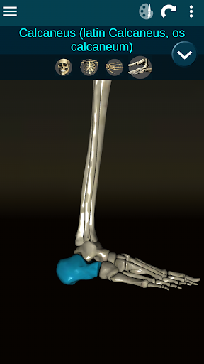 Osseous System in 3D Anatomy v2.0.3 screenshots 5