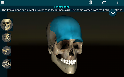 Osseous System in 3D Anatomy v2.0.3 screenshots 7
