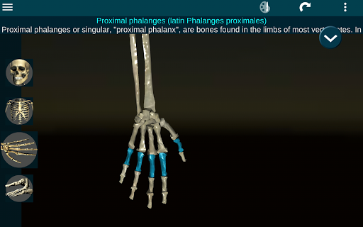Osseous System in 3D Anatomy v2.0.3 screenshots 9