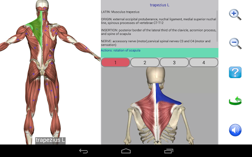 Visual Anatomy Free v0 screenshots 10