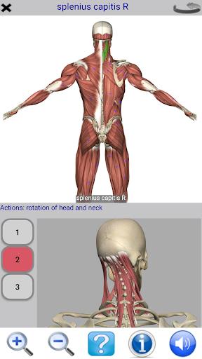 Visual Anatomy Free v0 screenshots 2