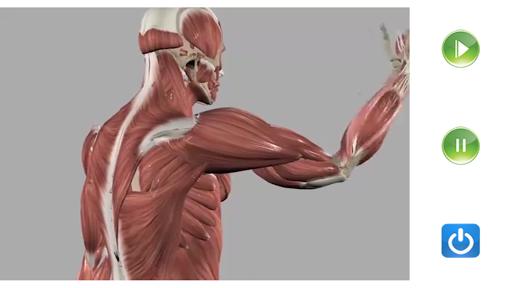 Visual Anatomy Free v0 screenshots 6