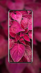 4K Wallpapers – HD amp QHD Backgrounds v8.1.48 screenshots 16