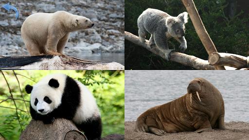 Animals for Kids Planet Earth Animal Sounds v8.3 screenshots 15