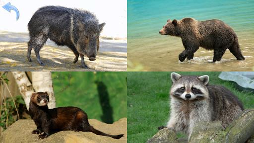 Animals for Kids Planet Earth Animal Sounds v8.3 screenshots 6
