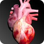 Download Circulatory System in 3D (Anatomy) 1.58 APK