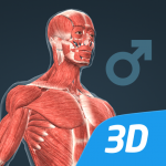 Download Human body (male) educational VR 3D 1.24 APK