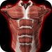 Download Muscular System 3D (anatomy) 2.0.8 APK