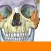 Download Sobotta Anatomy  APK
