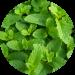 Free Download طب الأعشاب و فوائد الأعشاب 1.10 APK