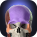 Free Download Anatomyka – 3D Human Anatomy Atlas 2.3.0 APK