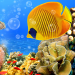 Free Download Aquarium Live Wallpaper 🐟 Fish Tank Background 2.8 APK