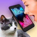 Free Download Cat Translator Simulator  APK