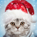 Free Download Christmas Photo Frames, Effects & Cards Art 2021.0.2 APK
