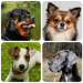 Free Download Dog Breeds – Quiz about all dogs of the world! 1.91 APK