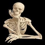 Free Download Human Anatomy 1.8 APK