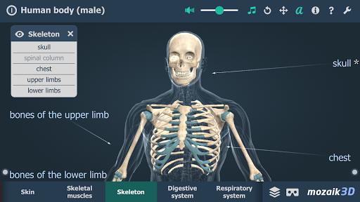 Human body male educational VR 3D v1.24 screenshots 3