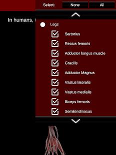 Muscular System 3D anatomy v2.0.8 screenshots 13