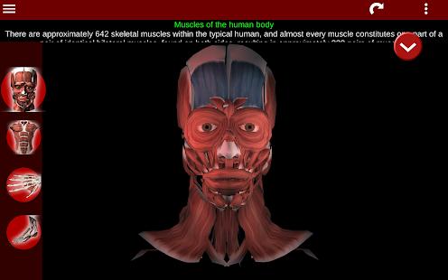 Muscular System 3D anatomy v2.0.8 screenshots 17
