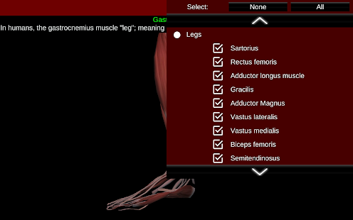 Muscular System 3D anatomy v2.0.8 screenshots 21