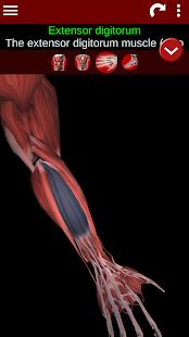 Muscular System 3D anatomy v2.0.8 screenshots 3