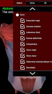 Muscular System 3D anatomy v2.0.8 screenshots 5