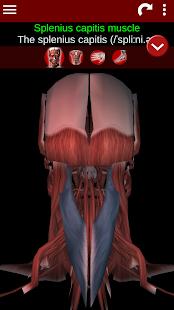 Muscular System 3D anatomy v2.0.8 screenshots 6