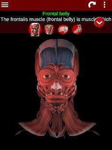 Muscular System 3D anatomy v2.0.8 screenshots 9