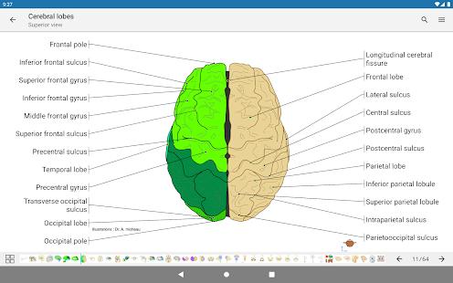 e-Anatomy v5.0.3 screenshots 16