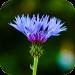 Download Blur Image – DSLR focus effect 1.19 APK